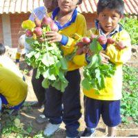 Dia1Oogst_in_Bolivia_2012