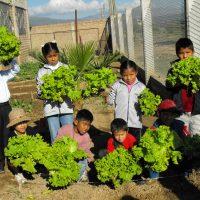 Trotse_kinderen_met_oogst_Cochabamba_Bolivia_Alerta_Verde_2009